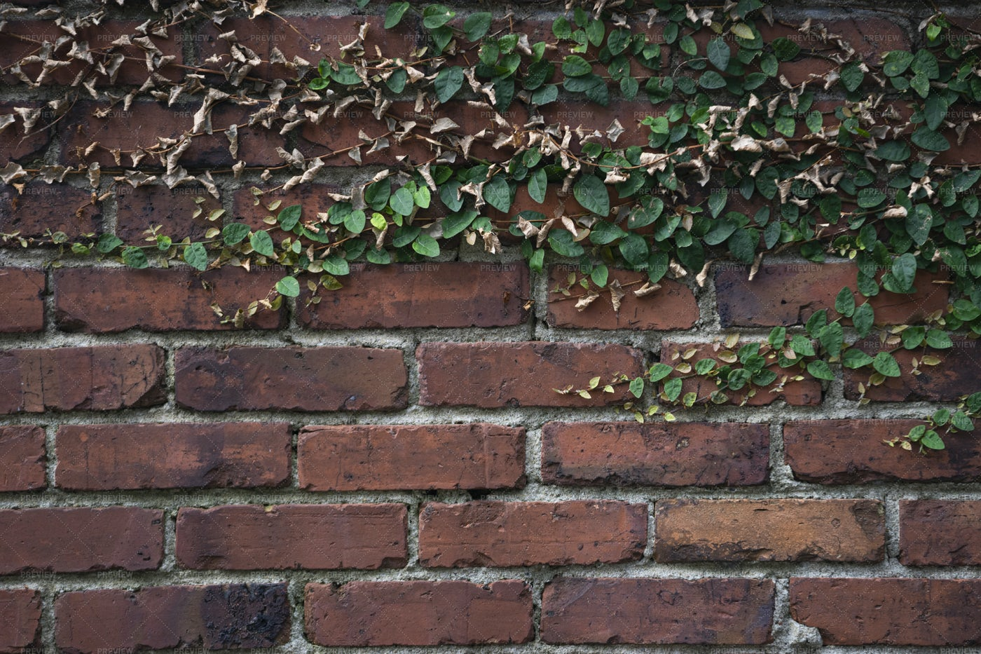Brick Wall And Ivy: Stock Photos