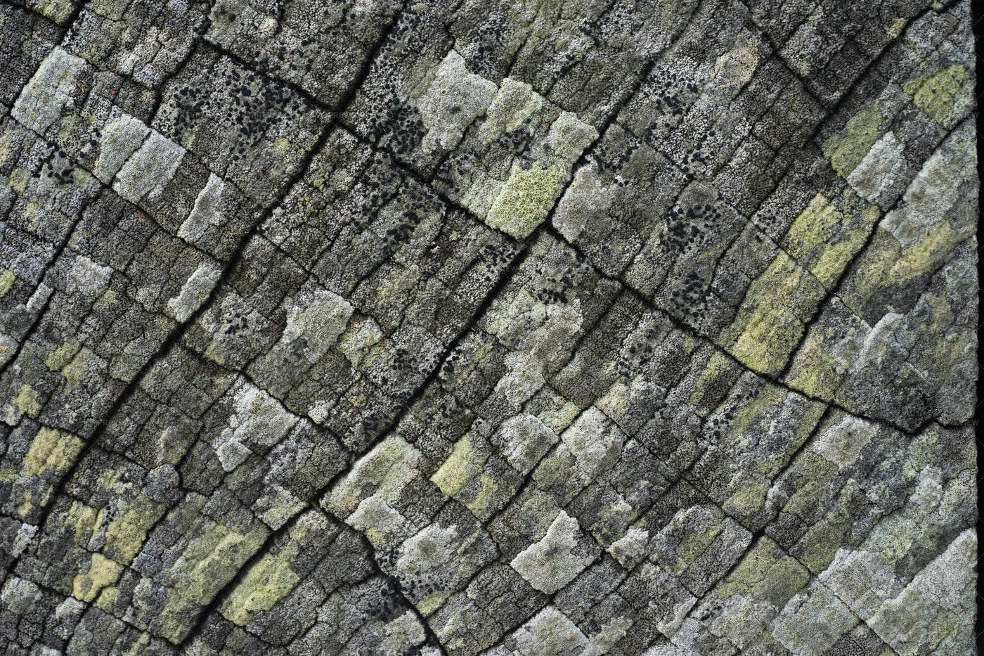 Lichens On Wood: Stock Photos