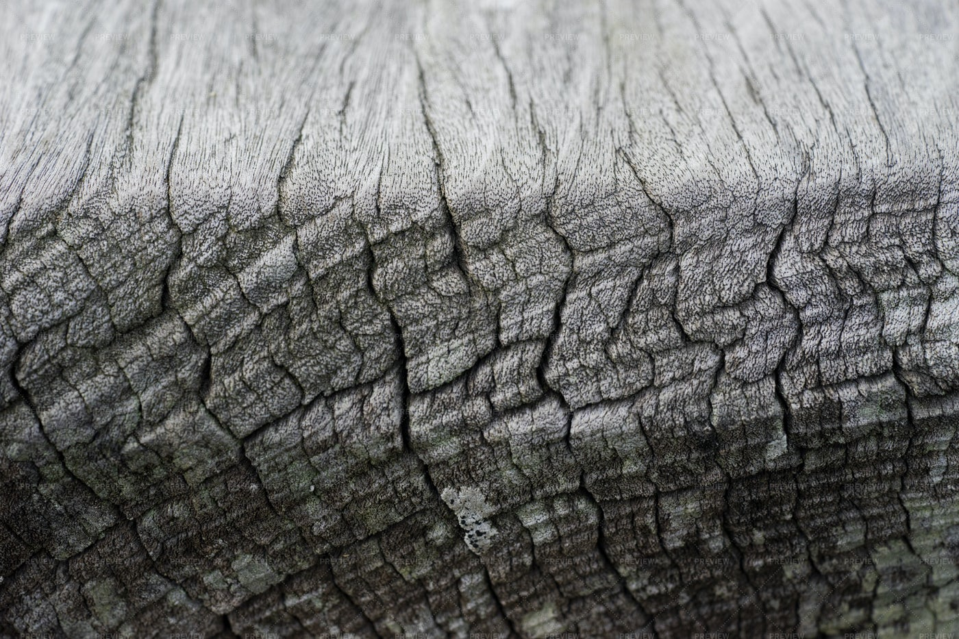 Cracked Wood Texture: Stock Photos