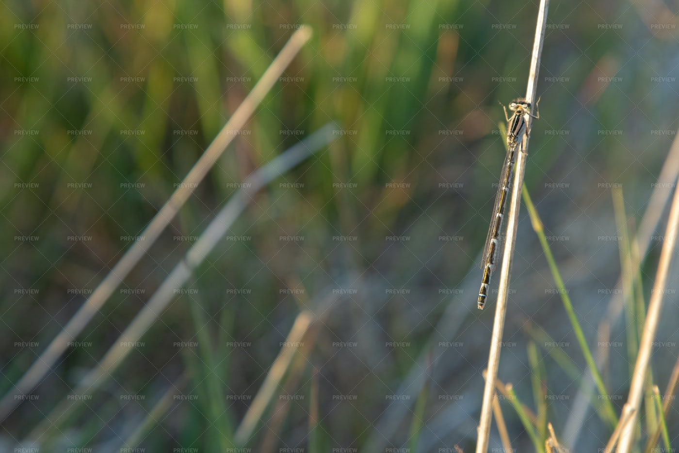 Dragonfly On The Grass: Stock Photos
