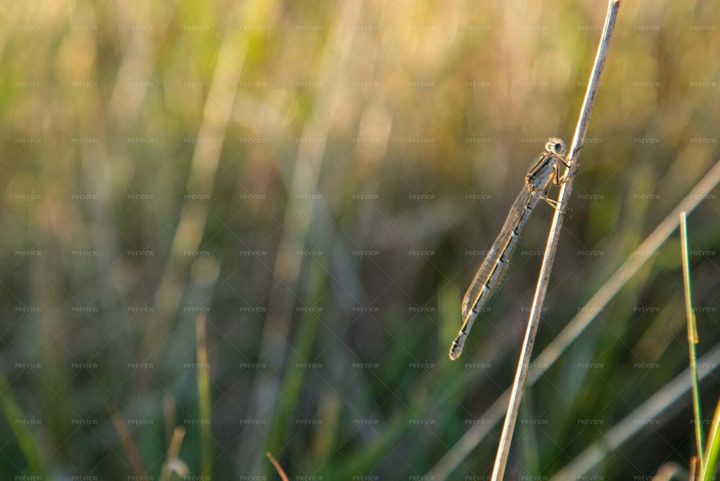 A Resting Dragonfly: Stock Photos