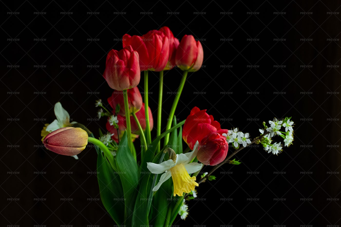 Tulips And Daffodils: Stock Photos