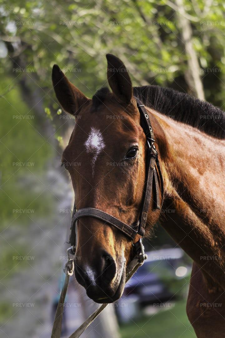 Horse Portrait: Stock Photos