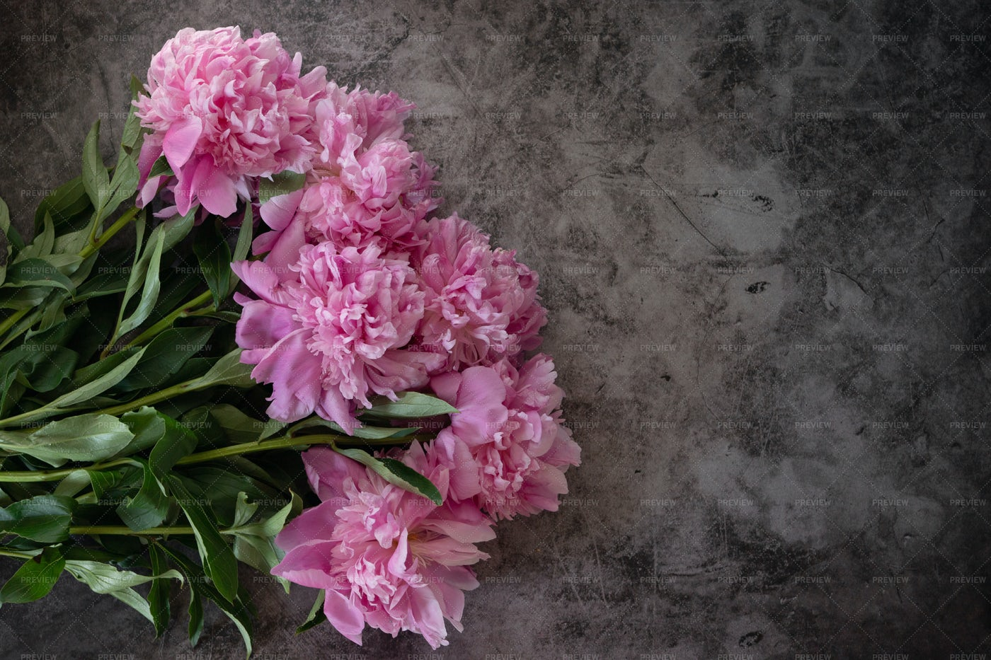 Pink Peony Flower On Cement: Stock Photos