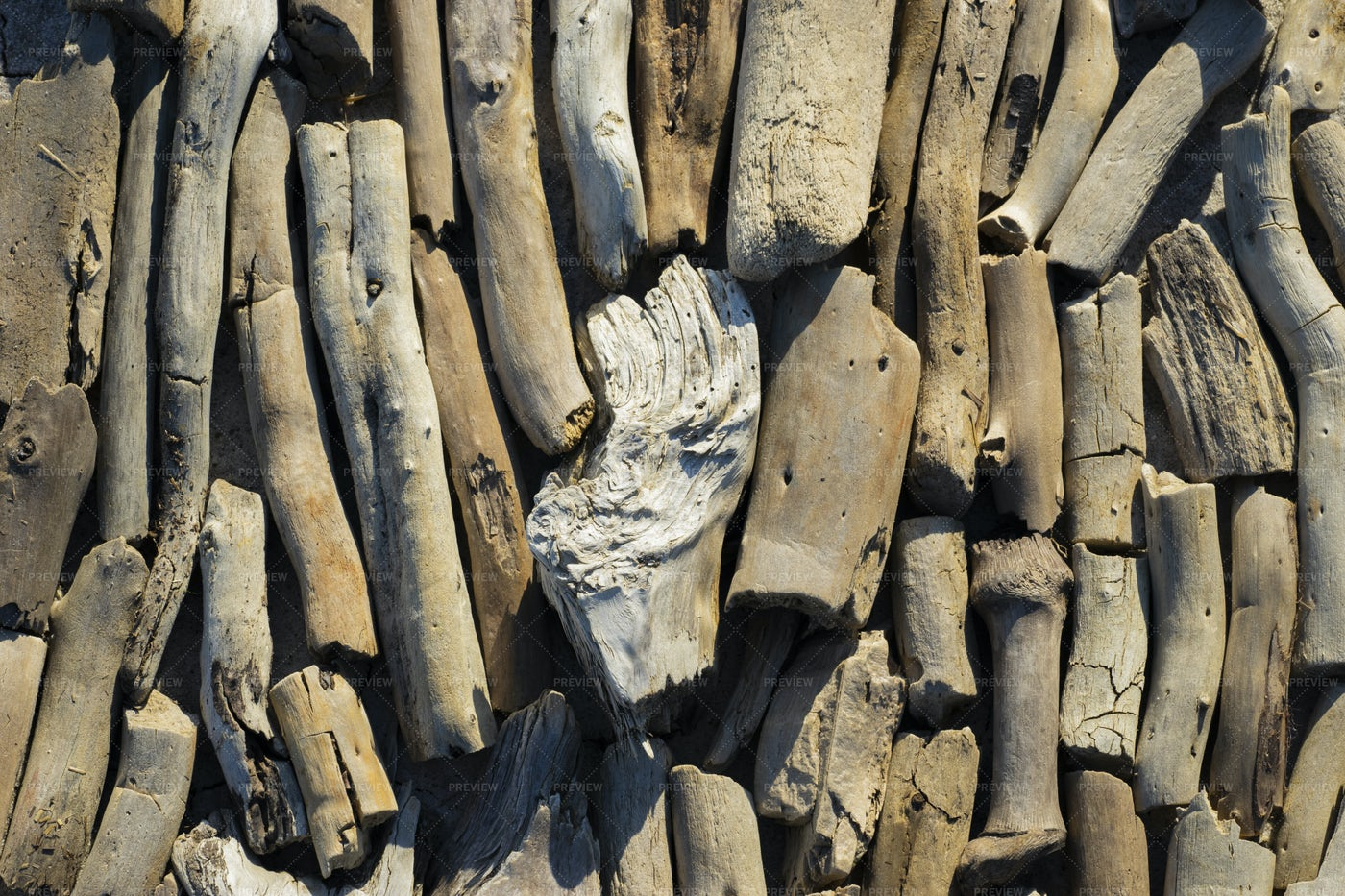 Collection Of Driftwood: Stock Photos