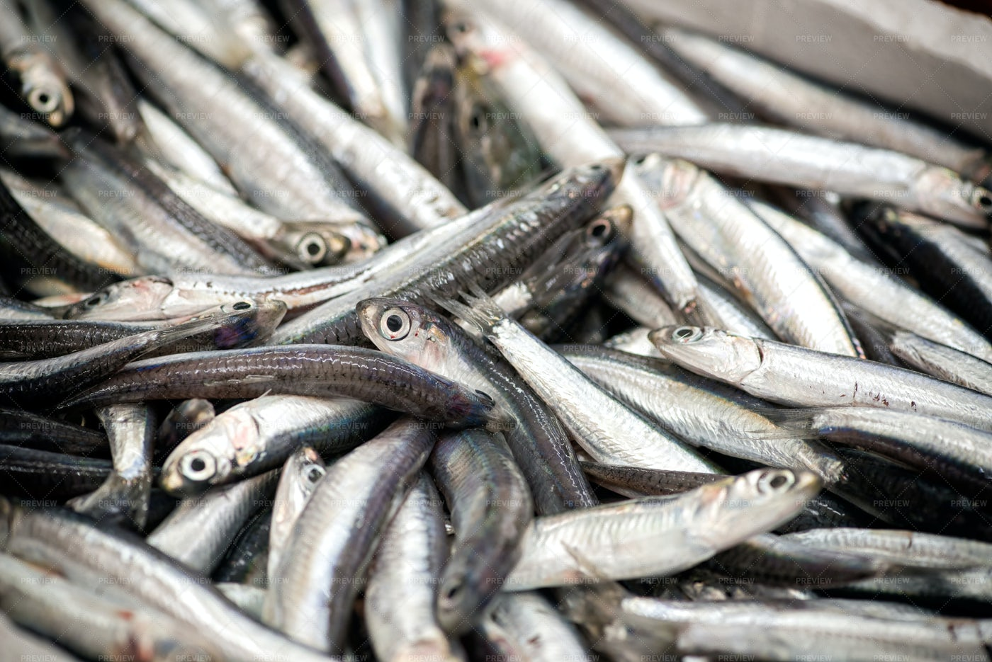 A Pile Of Anchovies: Stock Photos