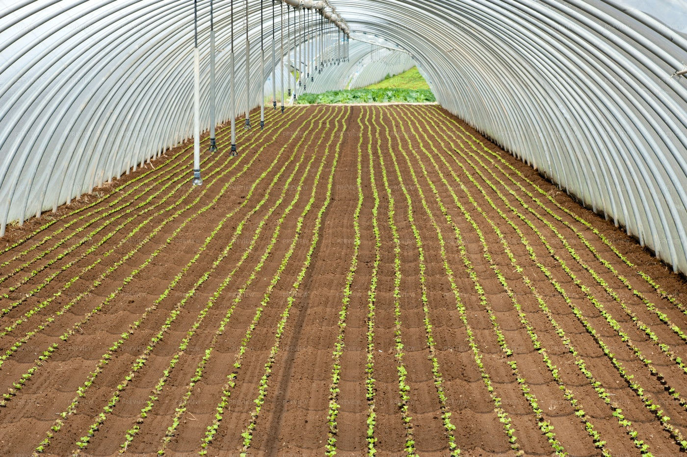 Seedlings Planted In A Tunnel: Stock Photos