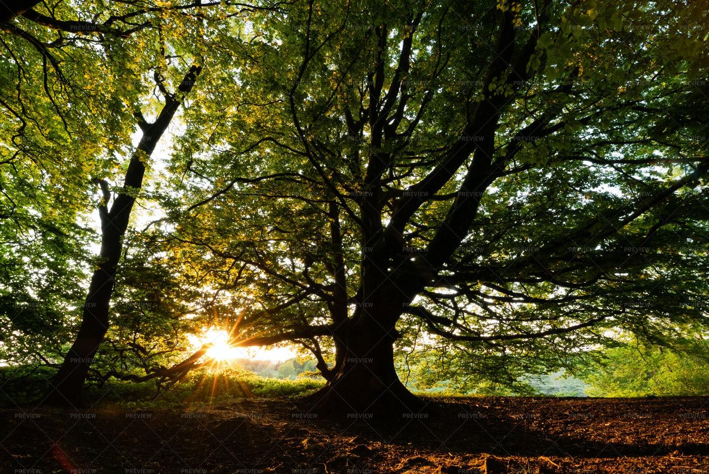 Sunset Through The Trees: Stock Photos