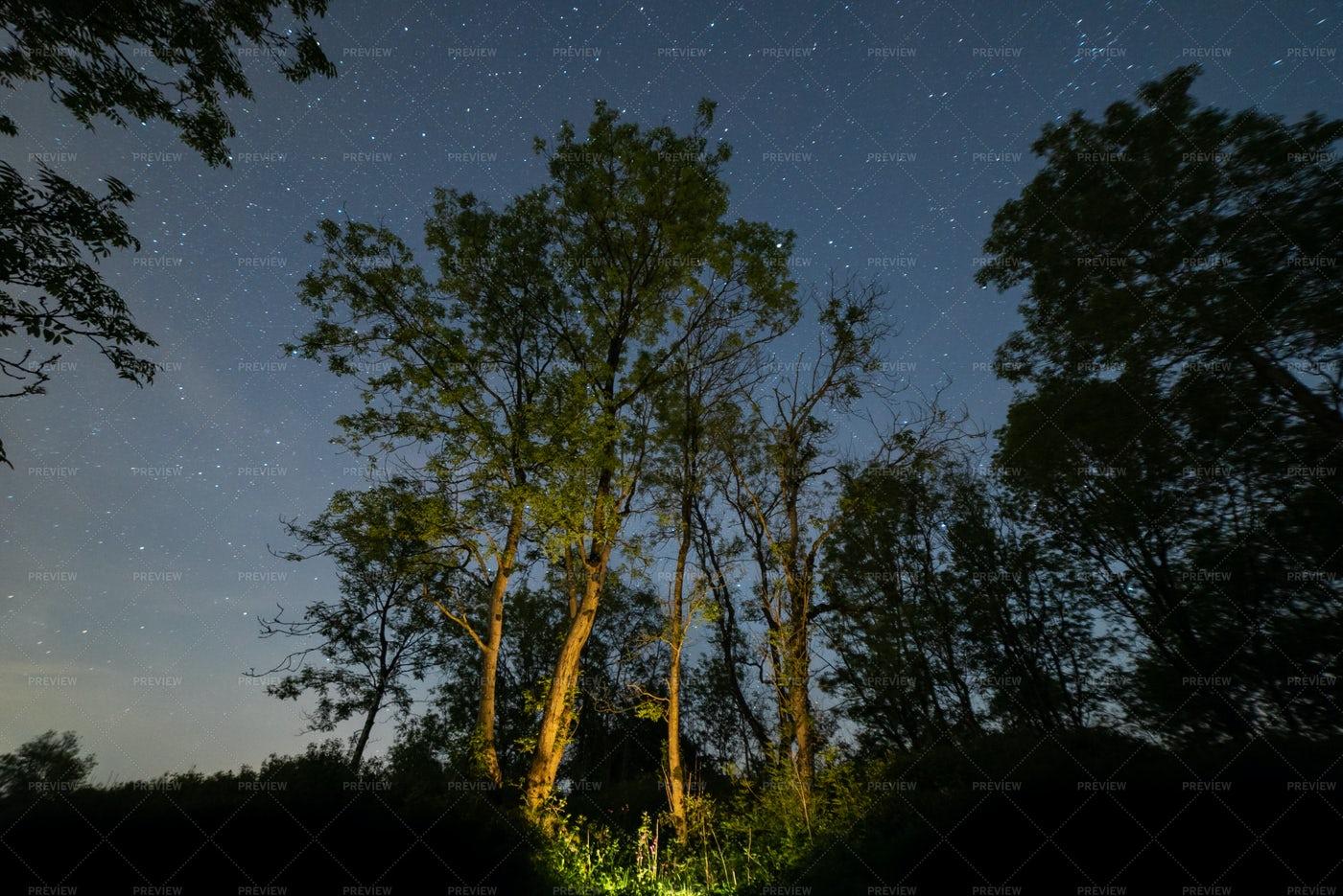 Illuminated Night Forest: Stock Photos