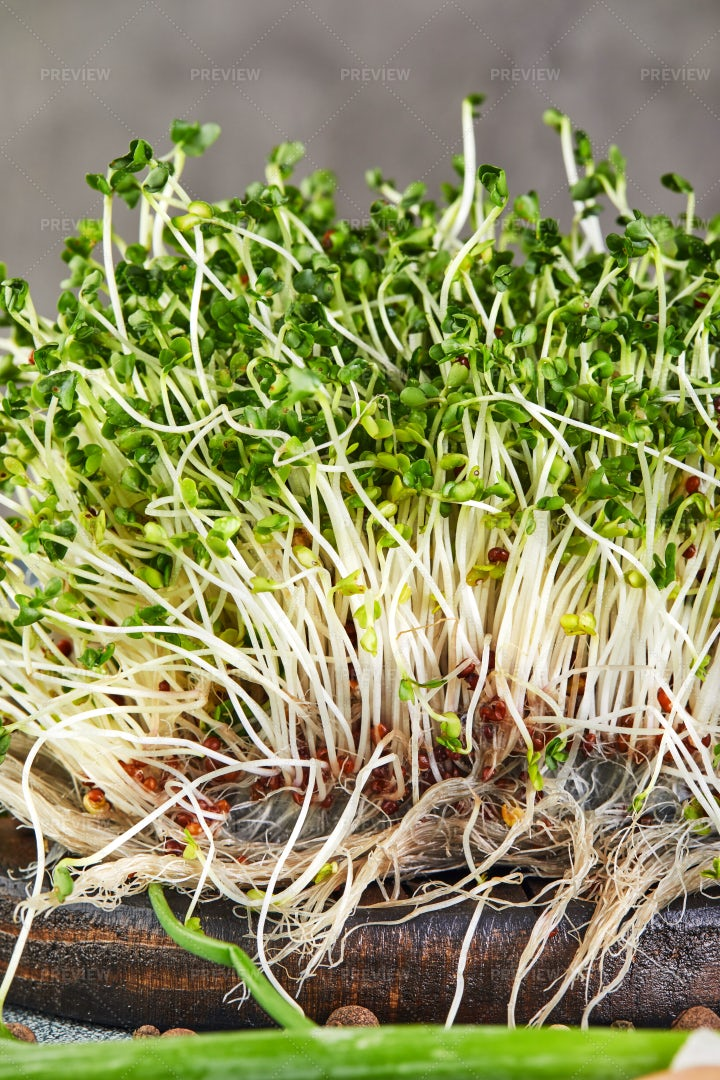 Green Sprouts With Roots: Stock Photos