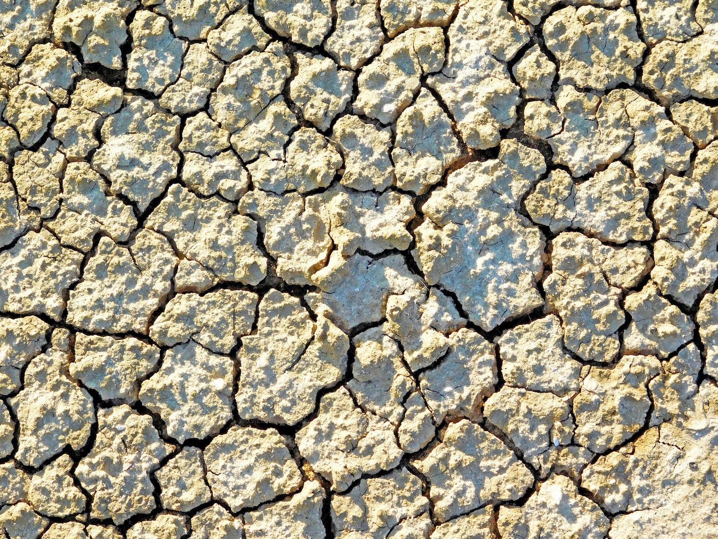Parched Earth Textures: Stock Photos