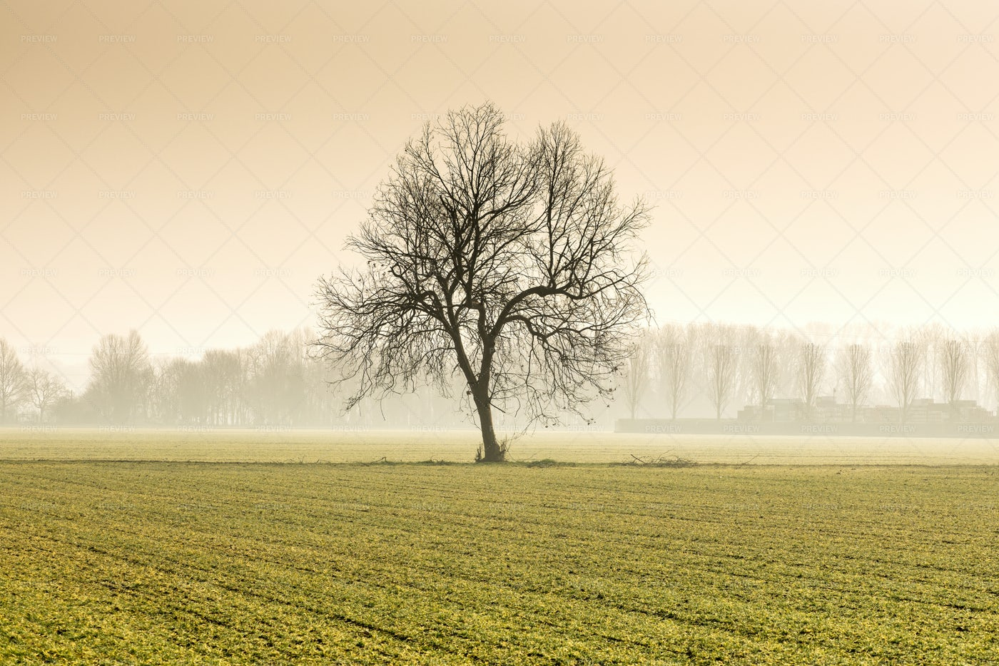 Lonely Tree In Field: Stock Photos