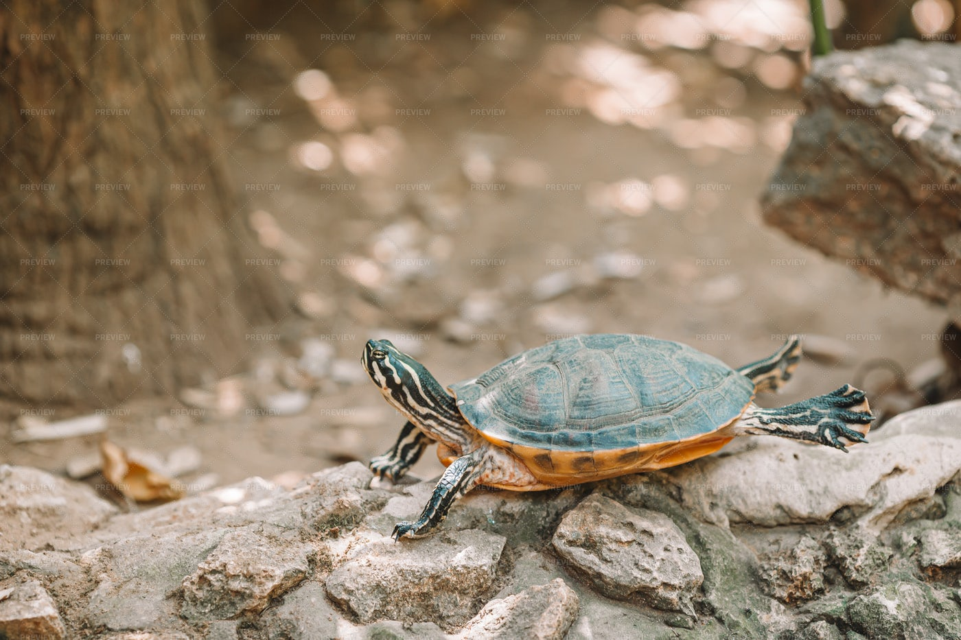 Turtle: Stock Photos