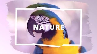Wild Opener: After Effects Templates