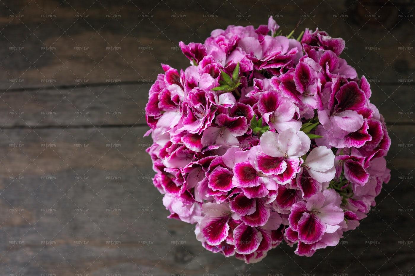 Geranium Flowers: Stock Photos