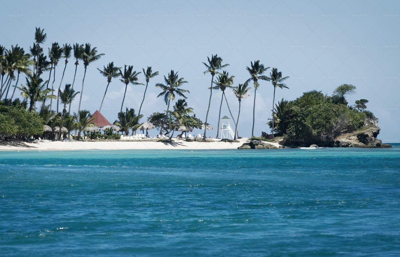Palm Trees At Beach: Stock Photos