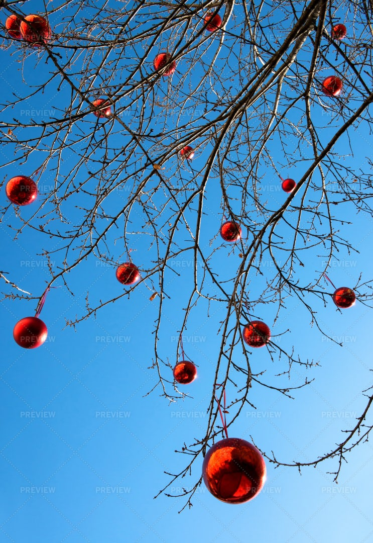 Outdoor Decorated Christmas Tree: Stock Photos