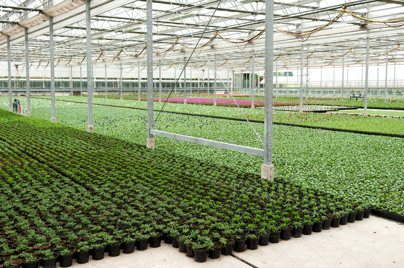 Pots In Greenhouse: Stock Photos