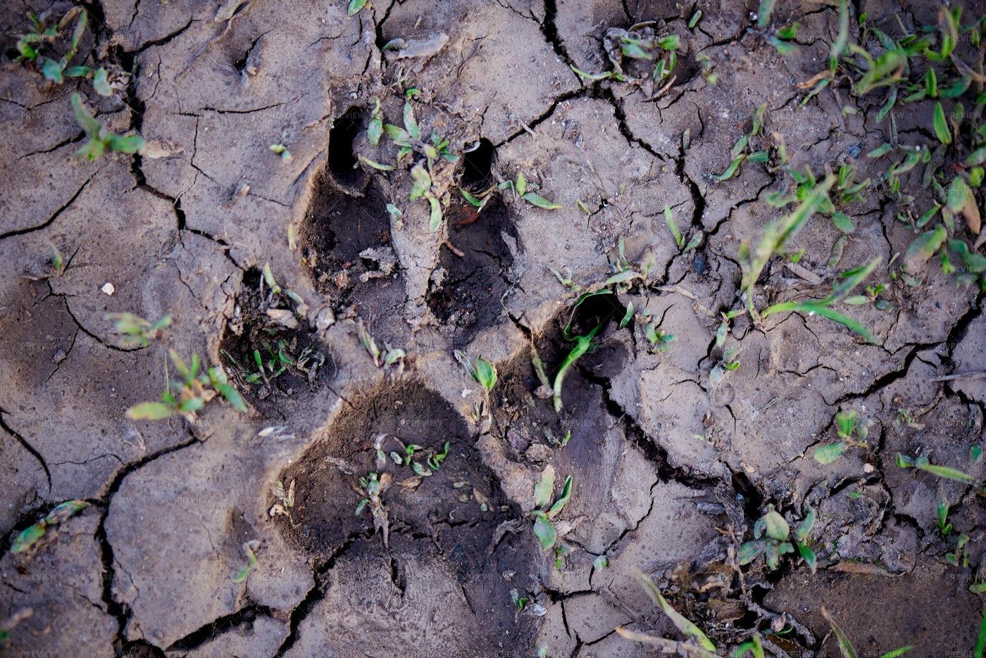 Animal Footprint In Soil: Stock Photos