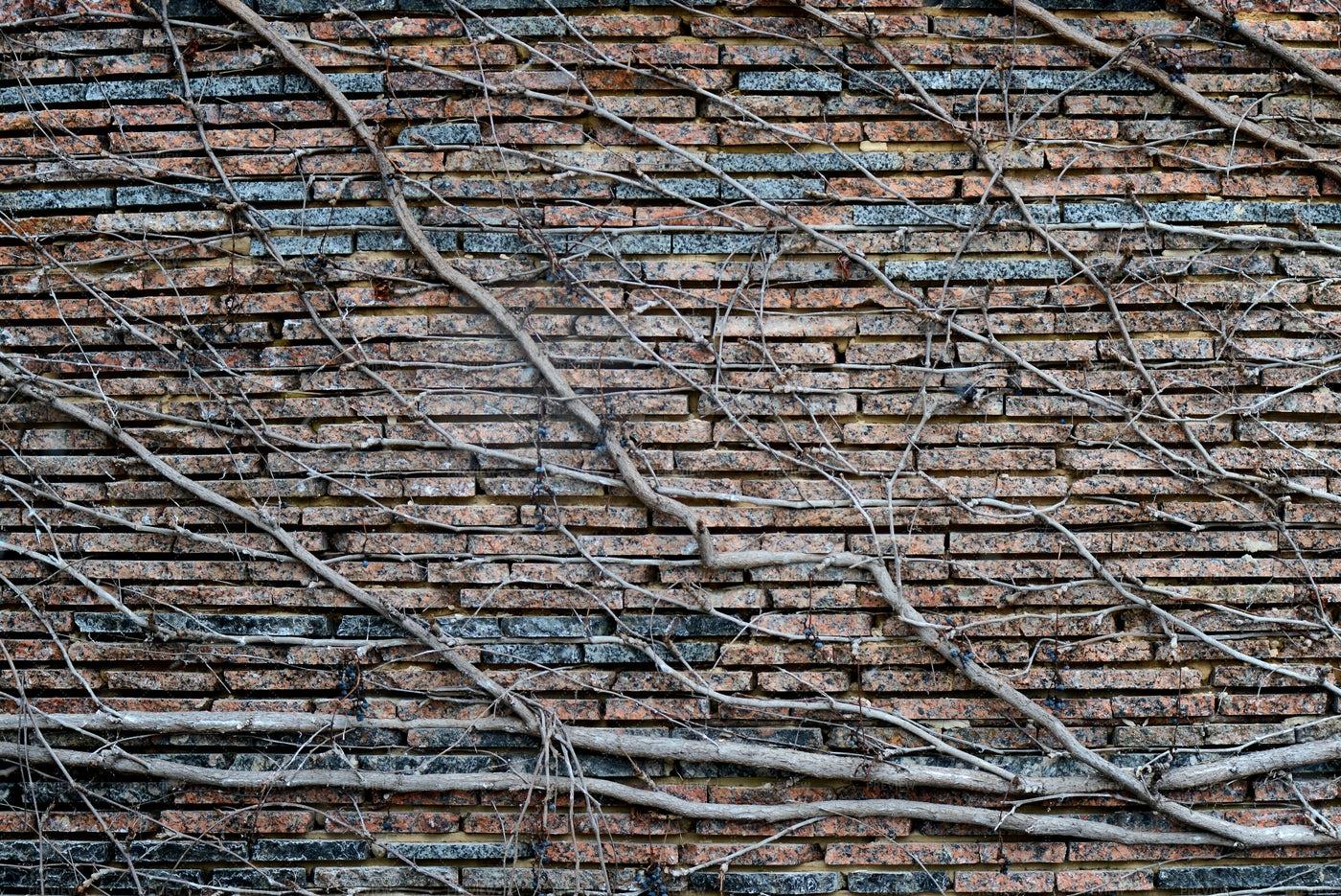 Tree Growing Along A Wall: Stock Photos