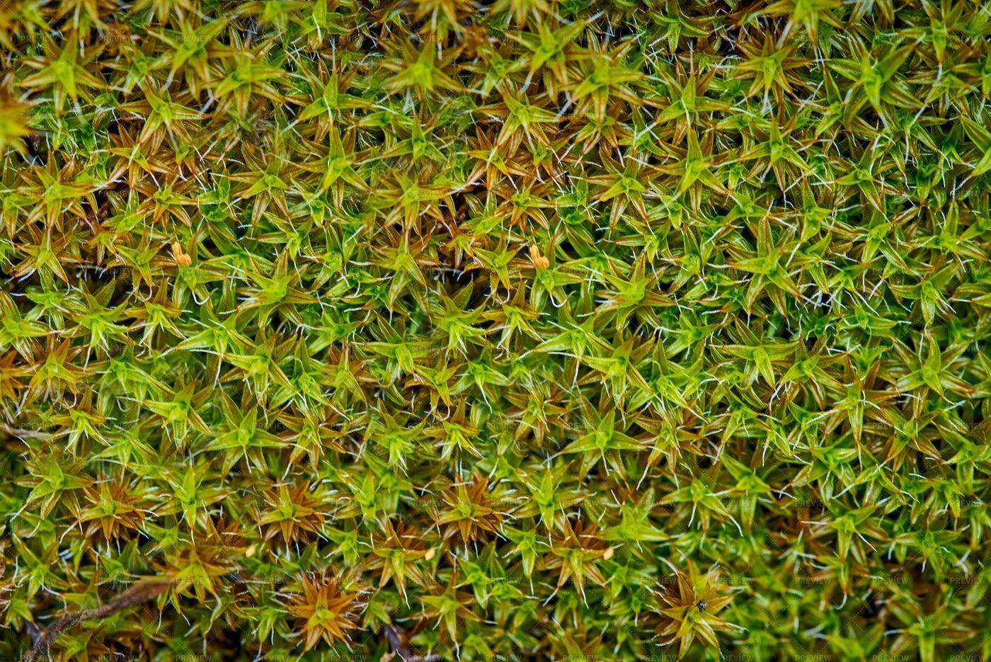 Moss In The Rain: Stock Photos
