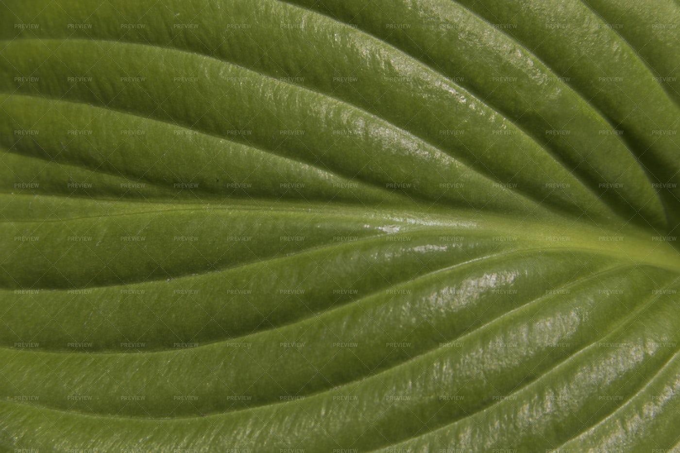 Green Leaf: Stock Photos
