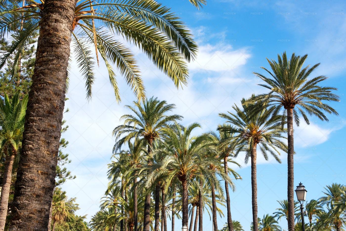 Tropical Coconut Palms: Stock Photos