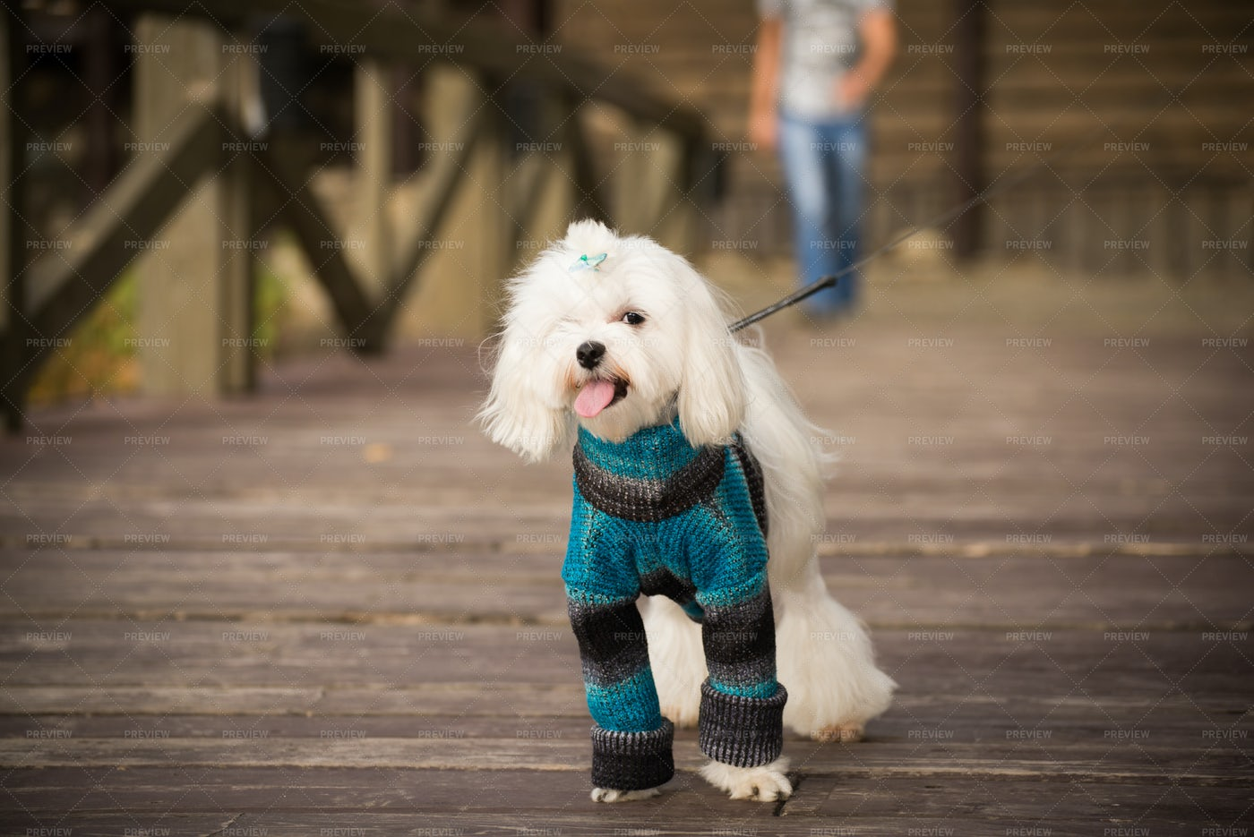 Dog In Knitted Clothes: Stock Photos