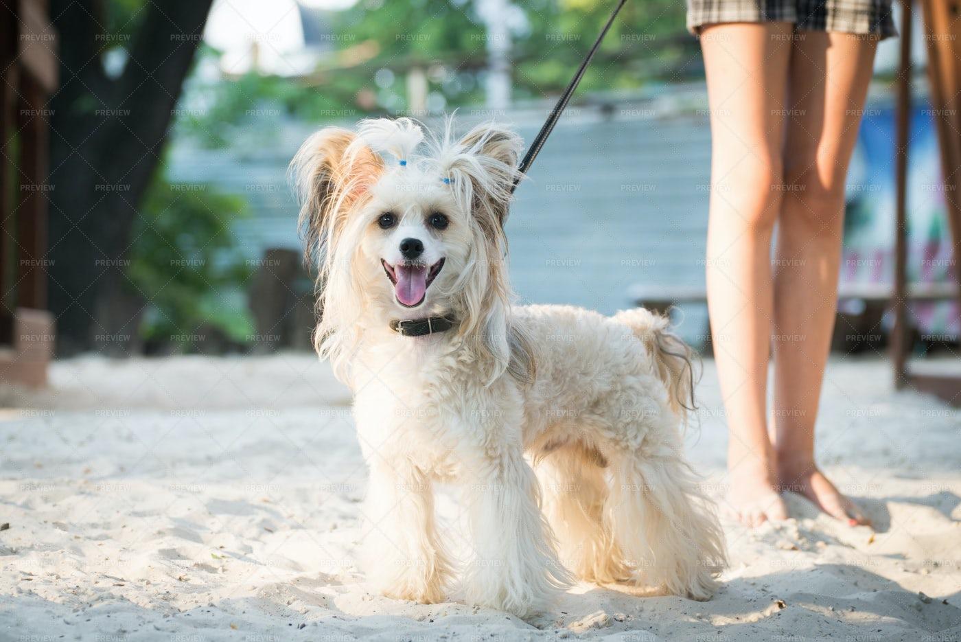 Dog At The Beach: Stock Photos