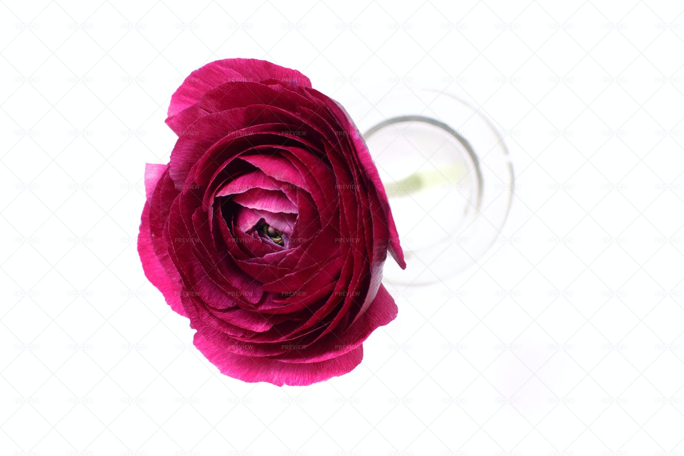 Pink Flower In A Bottle: Stock Photos
