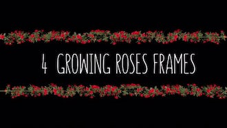 4 Growing Roses Frames: Motion Graphics