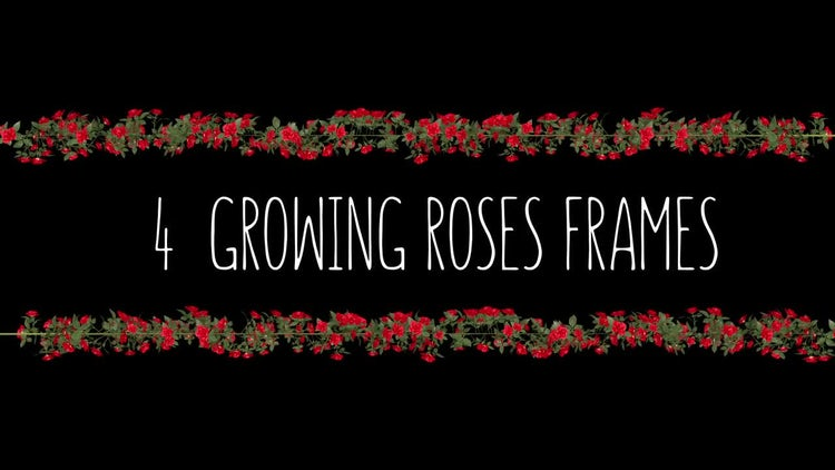 4 Growing Roses Frames: Stock Motion Graphics