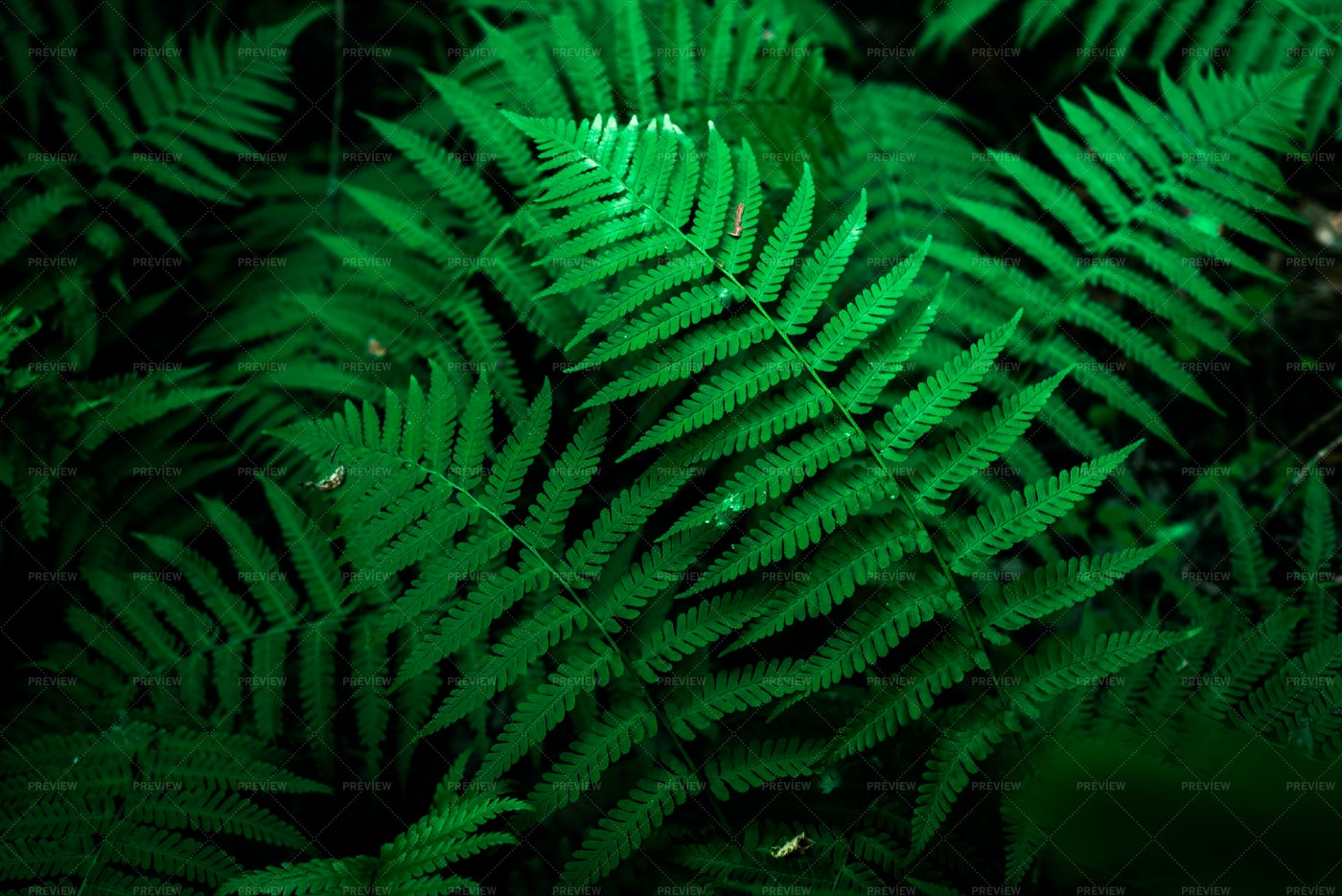 Green Fern Leaves: Stock Photos