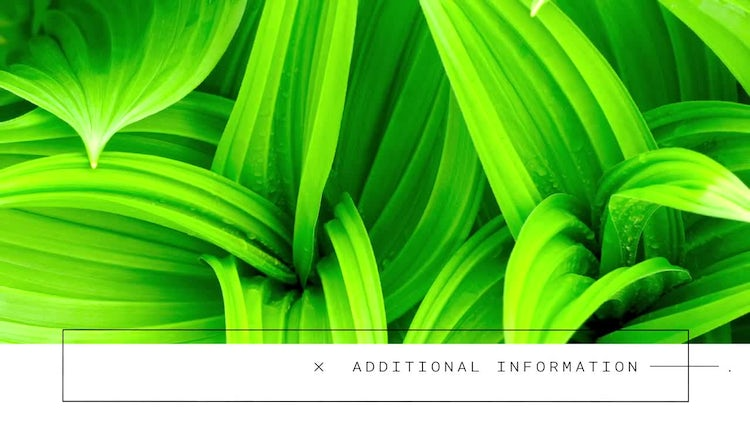 Clean & Modern Lowerthirds: After Effects Templates