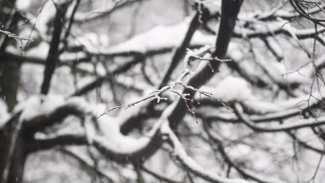 Macro Snowfall: Stock Video