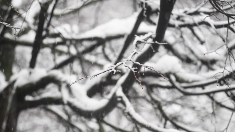 Macro Snowfall: Stock Video