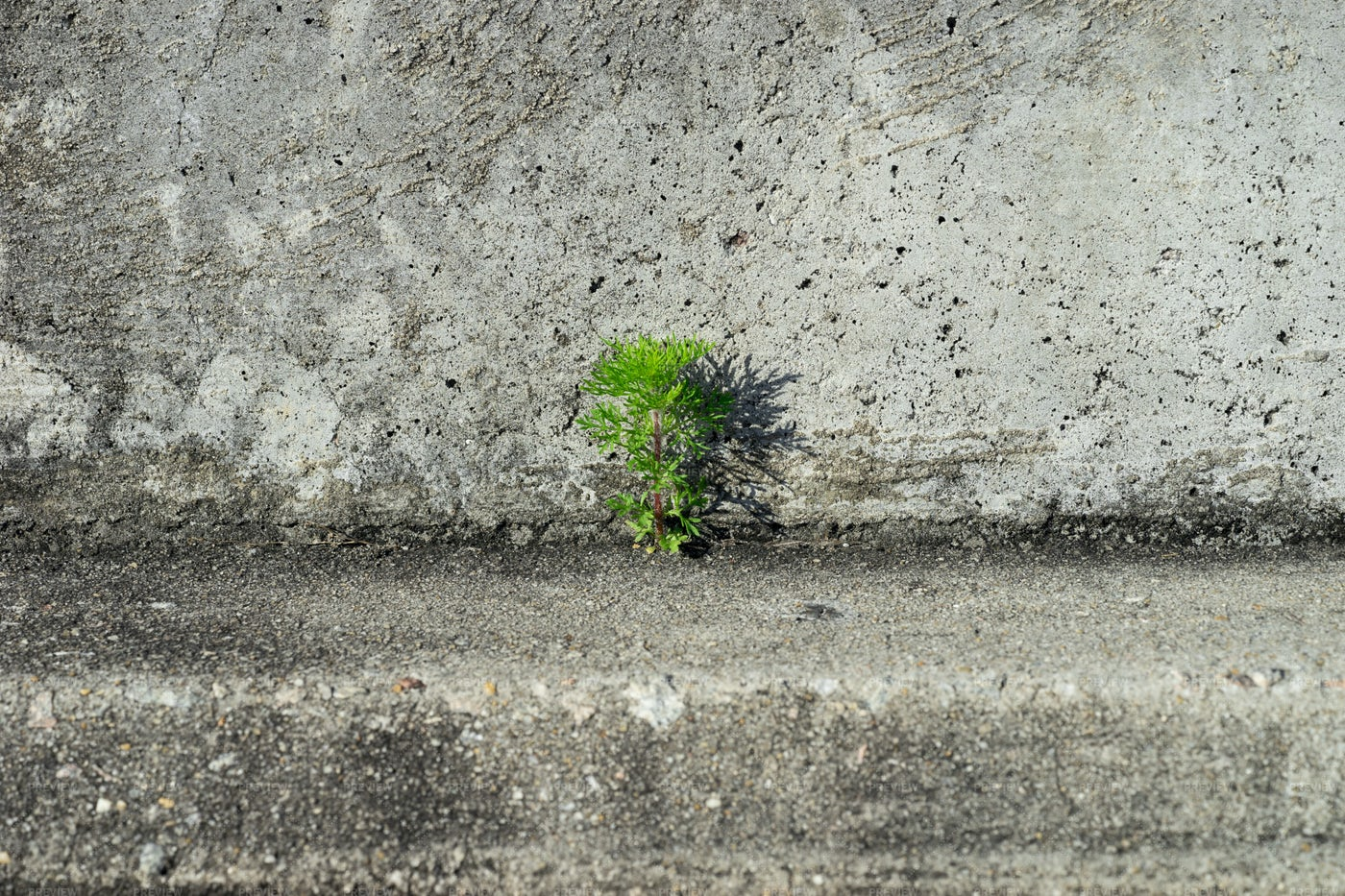 Plant On  Concrete: Stock Photos