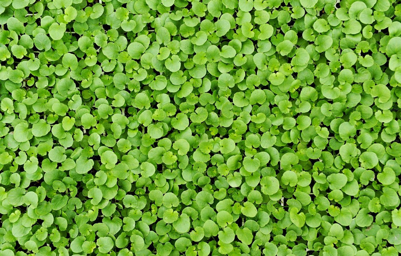 Fresh Green Leaves: Stock Photos
