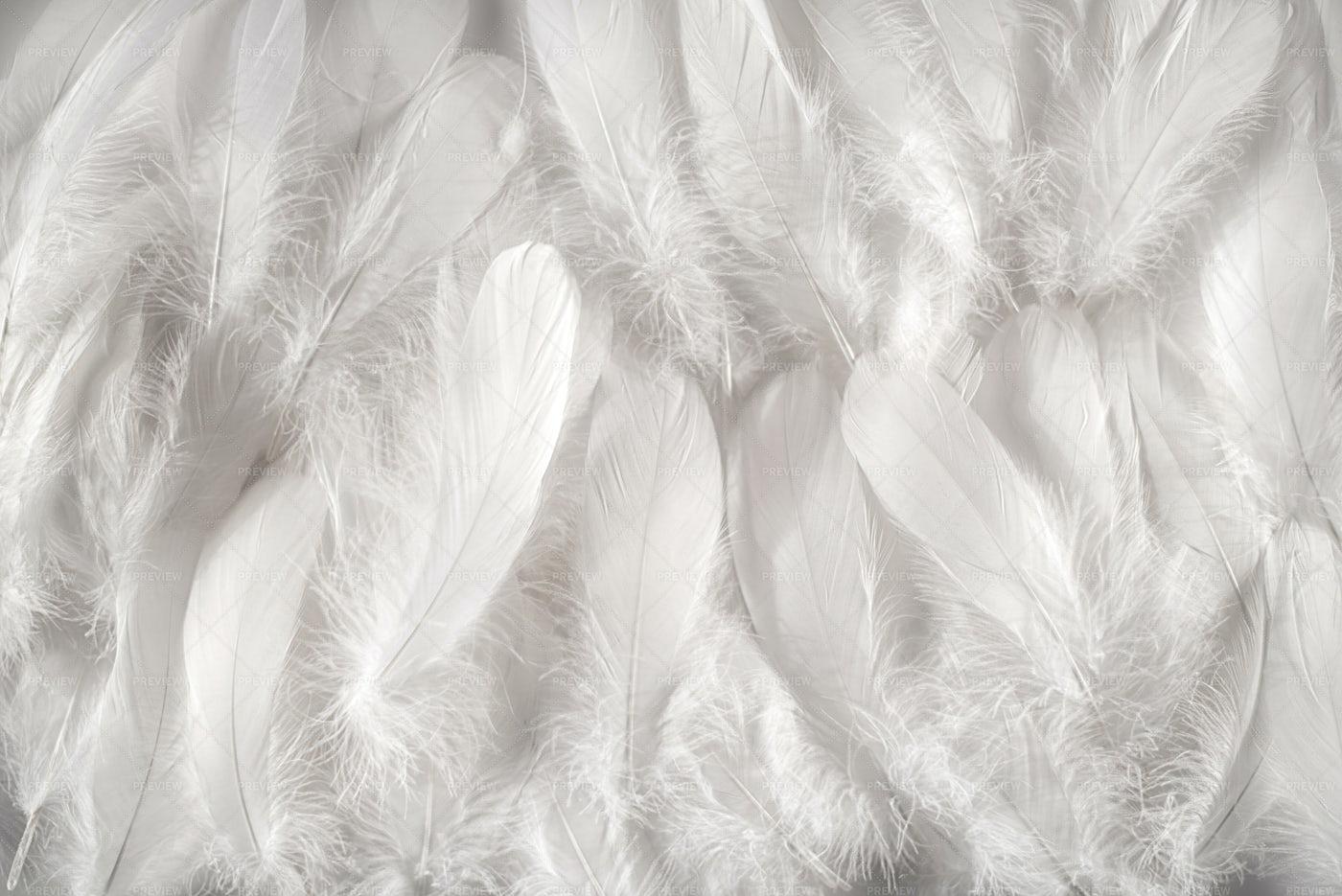 White Feathers: Stock Photos