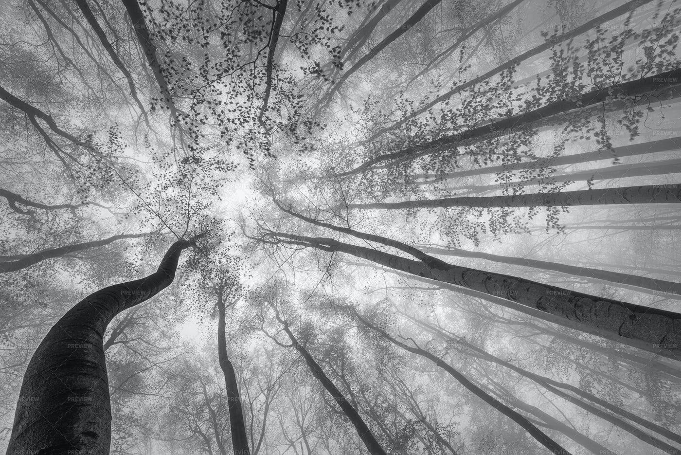 Springtime Trees Canopy: Stock Photos