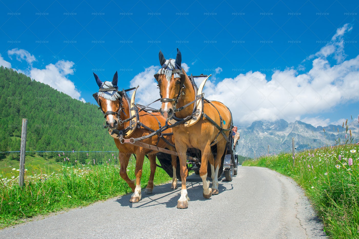 Horses Pulling A Carriage: Stock Photos
