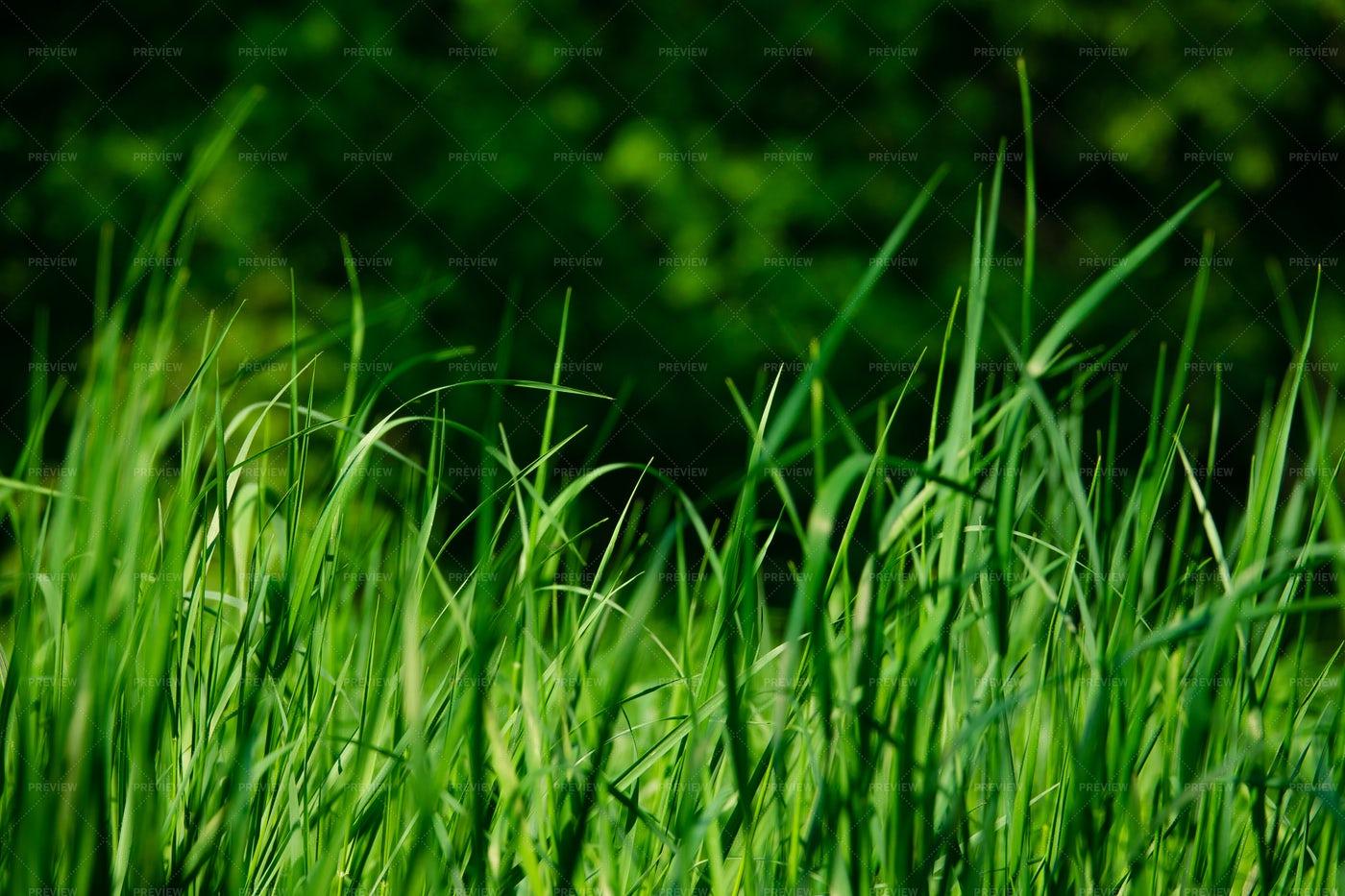 Fresh Green Grass: Stock Photos