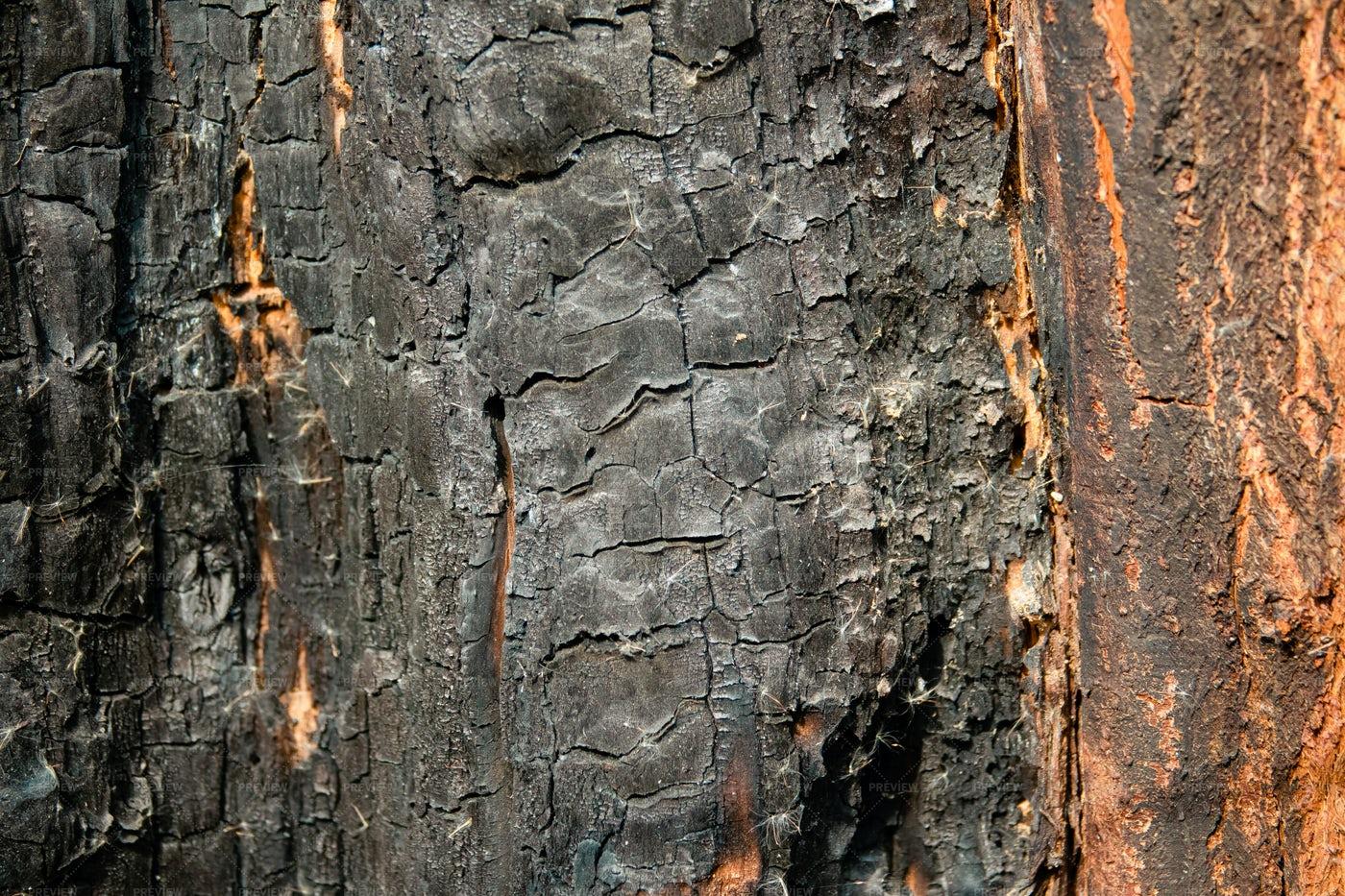 Burnt Tree Bark Texture: Stock Photos