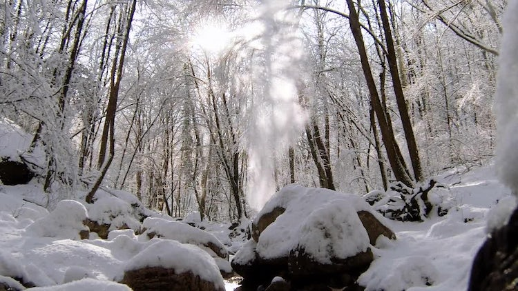 Sunlight Bursts Through Snow-Covered Trees: Stock Video