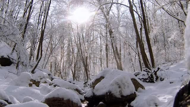 Huge Glittery Snow Flakes Falling: Stock Video