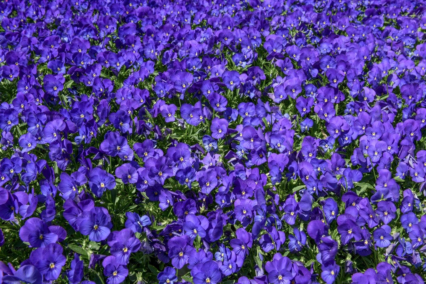 Floral Violet Pattern: Stock Photos