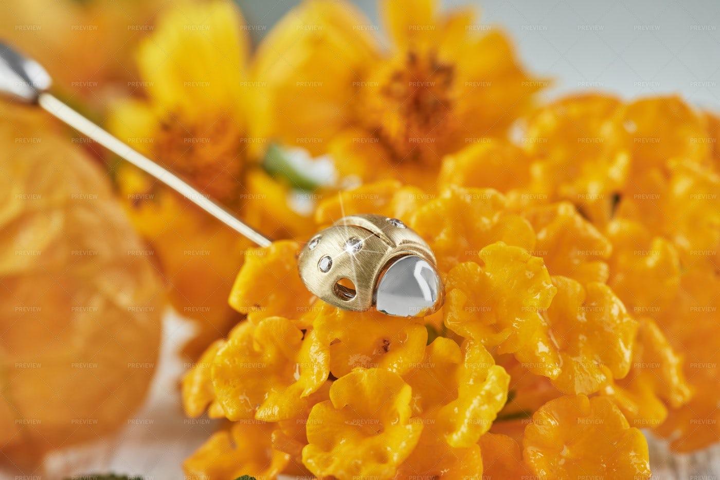 Lady Bug Jewel: Stock Photos