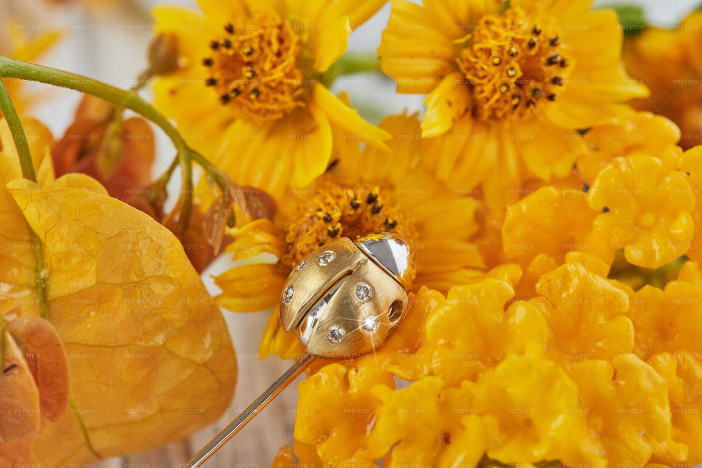 Ladybug Brooch On Flowers: Stock Photos