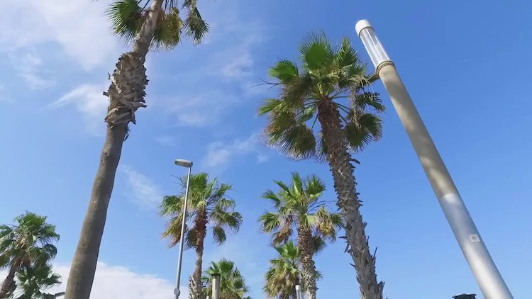 Palm Tree Drive: Stock Video