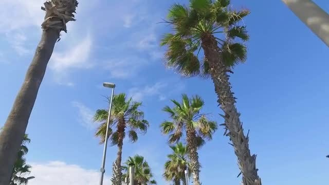 Palm Tree Drive: Stock Video